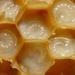 Пчелиное маточное молочко: не молоко, но пользы еще больше!